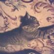 そういえば先代ネコも・・・