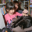 黒猫ジジィ 日日是好日
