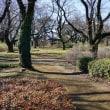神代植物公園の梅園です 其の3