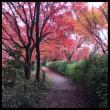 紅葉〜part2