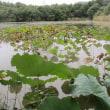 牧野が池緑地の散歩