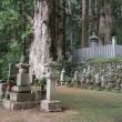 ミモロ高野山へ行く(6)20万基を超える墓石が鎮座する杉林。2キロの参道を進む。