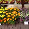 花と野菜の苗