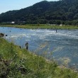 ・ 相模川自然の村 彼岸花① 2017