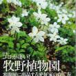 園芸JAPAN11月号発売開始!!