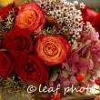 写真とお花と、そしてねこ。