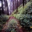 林間に咲くキツリフネ