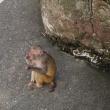 東武動物公園にお出かけ