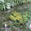 2005年7月18日 白川水源 その2