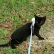 猫も散歩する時代