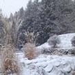 ついに畑にも本格積雪!