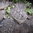 屋外飼育中の泥亀たちの水分補給