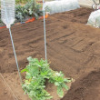 春夏野菜植付準備開始。畑の起耕をしました。