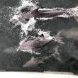 イルカを探して・・・・