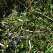 布野ダッシュ村は春真っ盛り