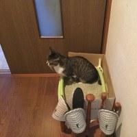 トイレなう