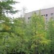 横浜英和157 「静かな青山学院キャンパス」