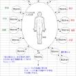 7.想念形体(エレメンタル)~性質と分類