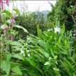 「東の庭」の香りの競演