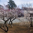 週初めは小田原城の梅