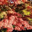 深大寺境内は紅葉に埋もれていた!