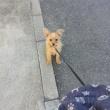 はじめての散歩