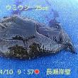 笑転爺の釣行記 4月10日☀ 浦賀・長瀬