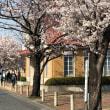 桜、サクラ、    今年は堪能しました。