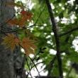 秋の和琴半島 Autumn in Wakoto