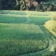 朝の田んぼ畑巡り、