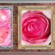 image2544 公園の薔薇1