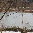 勝山での「水鳥コロニー」健在。