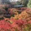 今年も紅葉狩りは東福寺