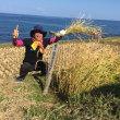千枚田の稲刈りに挑戦!