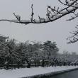 今日の鶴岡公園