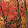 洞光寺の紅葉(2)