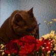 花は眺めるもの?それとも・・・