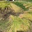稲刈りが終わりました。出来のいいコシヒカリが収穫できました。