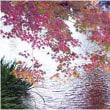 万博日本庭園
