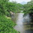 新緑の五条川