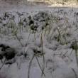 とりあえず挨拶ですと朝の雪