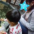 コイにエサやり@東京タワー