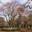 2018年 大宮公園の桜チェック。