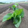 【注意】土壌消毒の取り扱いについて【重要】
