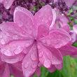 梅雨と花☔&🌼