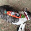 猫キッカー