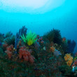 逗子のサンゴ ソフトコーラルの海
