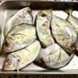 魚のウロコ取りはペットボトルキャップが◎☆キアラ(アオハタ)っていう魚、お初にお目にかかります(゜))<<