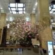 「日本橋の桜」