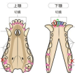 歯についてのまとめ*4~粘り強い細菌